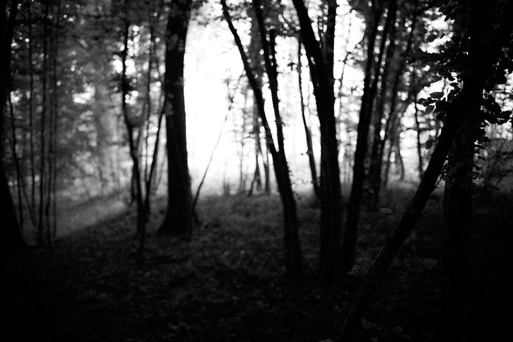FRED CSUPOR BLACK NIGHT